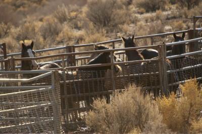 Oppose BLM Roundup In Wyoming